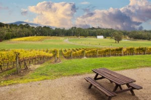 Yarra valley Winery Melbourne day trip