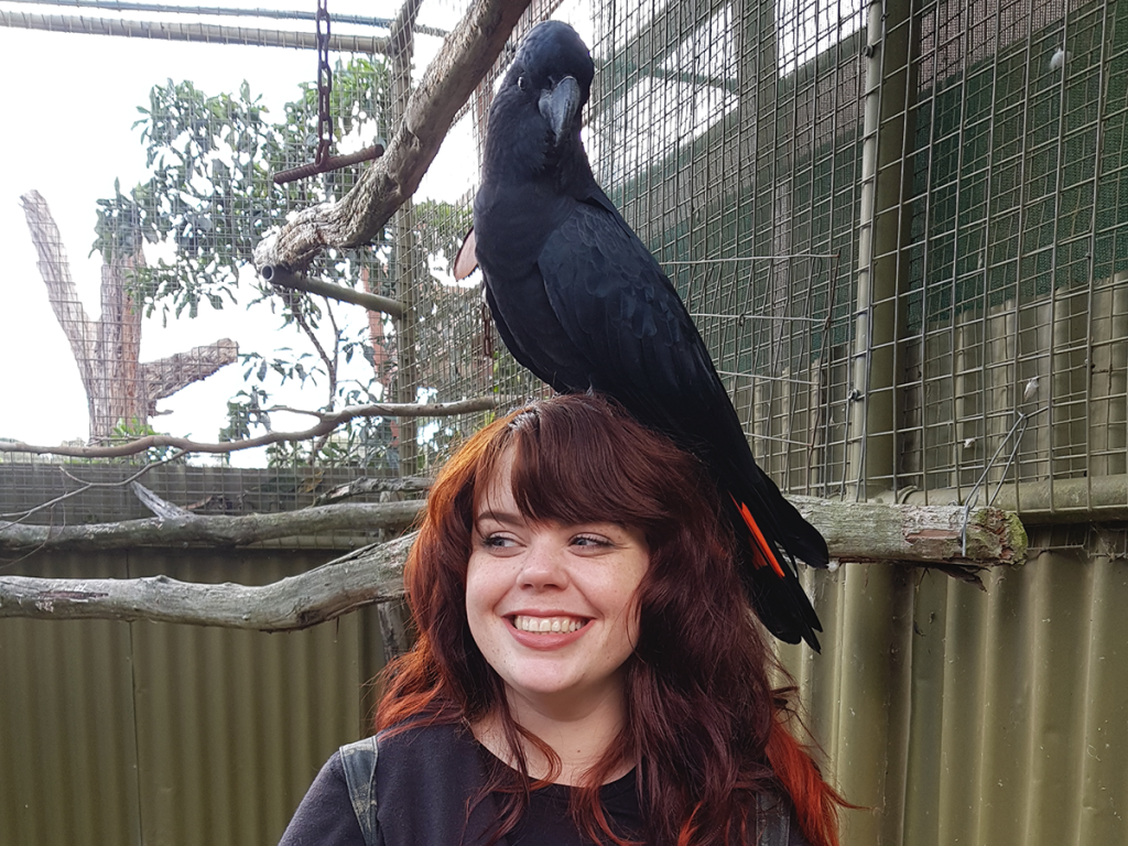 black cockatoo on head at ballarat bird world melbourne