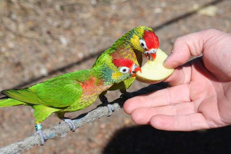 redhill lookout canberra things to do in canberra with kids