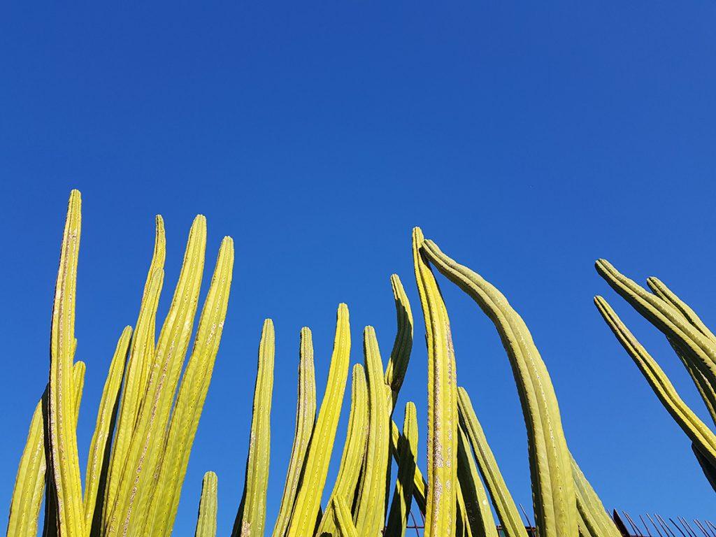 royal botanic gardens melbourne cactus